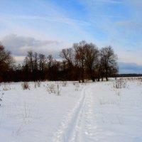 Пейзаж с лыжней. :: Александр Атаулин