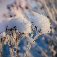 Снегом окутаны :: Ирина Никифорова