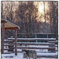 суровая зима спустилась с январём :: Natalia Mihailova