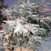 маленькой елочке холодно зимой... :: helga 2015