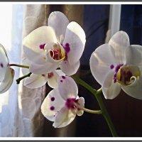 Зимние цветы :: Любовь Чунарёва