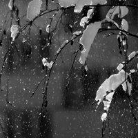 Падал  снег. :: Валерия  Полещикова