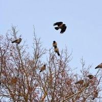 /// :: linnud