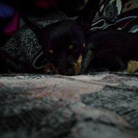 Спящий той. :: Света Кондрашова