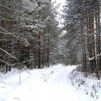 Зимняя дорога :: Татьяна Ракутина