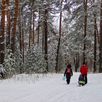 По свежевыпавшему снегу... :: Лесо-Вед (Баранов)