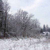 Зима :: Оксана Пучкова