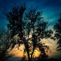 Одинокое дерево :: Сергей Руденко