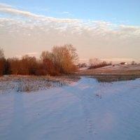 Под снежным одеялом. :: Елена Данилычева
