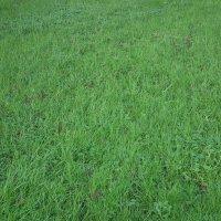 Травка зеленеет в январе! :: Natalia Harries