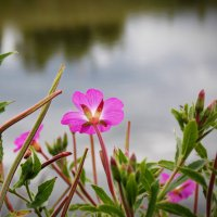 у озера :: лиана алексеева