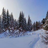 Тропинка в лесу :: Анатолий Иргл