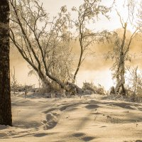 морозное утро :: татьяна