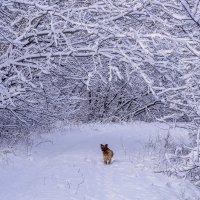 Прогулка по первому снегу :: Игорь Сикорский