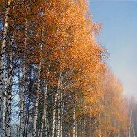 Золото осени :: Николай Белавин