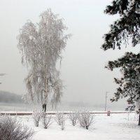 Берёзка  русская :: раиса Орловская