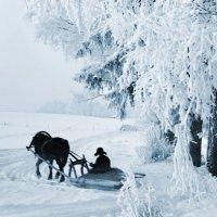 За дровами :: Валерий Талашов