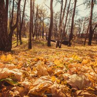 Золотая осень :: Маша Крайнуша