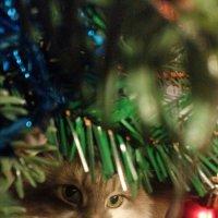 Дед мороз :: Наталия Маресьева