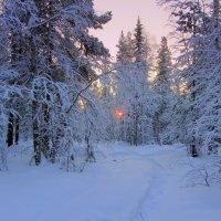 В лесу,зима. :: Галина Полина
