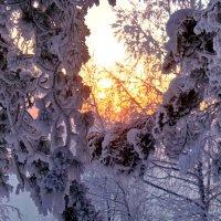 Рождественский восход... :: Галина