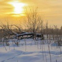 Поваленное дерево :: Сергей Корнев