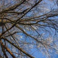 Замерзшее старое дерево. Красиво, однако... :: Владимир Буравкин