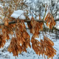 Яркие картинки зимы :: Милешкин Владимир Алексеевич