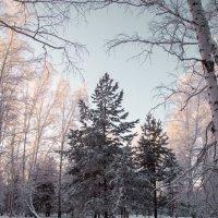 Зимний лес :: Ольга