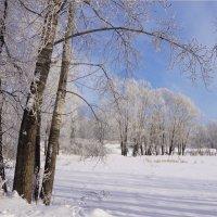 Замёрзший пруд :: Наталия Григорьева