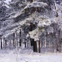 Сиреневый лес :: Наталия Григорьева