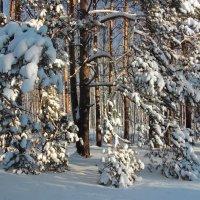 Устав от снегопада дремлют сосны... :: Лесо-Вед (Баранов)