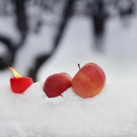Снежное настроение :: Наталья Киоссе