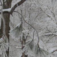 небольшой снежный пейзажик :: Ольга Шерстобитова