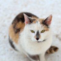 Зимний кот :: Павел Чекалов