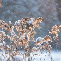 Зимняя :: KotoPalych Gf