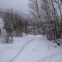 Зимний лес :: Zifa Dimitrieva