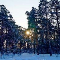 в лесу с утра :: Кристина Воробьева