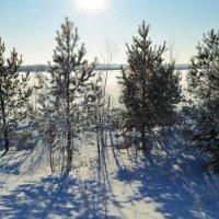 Зимнее солнце :: Вера Андреева