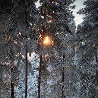 волшебный лес :: Вадим