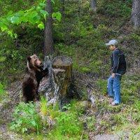 В лесу всякое бывает... )) :: Nikolay Zinoviev
