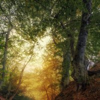 Таинственный лес :: Владимир Колесников