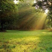 Солнечный свет :: Alexander