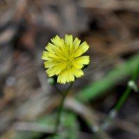 цветок :: Олег Сливанков