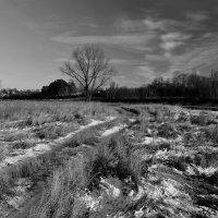 Черно-белая зима :: Евгений (bugay) Суетинов