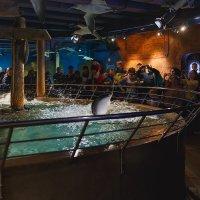 Шоу со скатами Океанариум СПБ :: Александр Кислицын