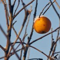 Зимой и летом одним цветом :: Андрей Куприянов
