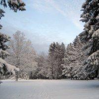 Зима :: laana laadas
