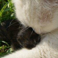 мама с ребенком :: Татьяна Толмачева