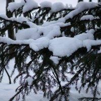 Где-то в лесу :: Виктория Браун